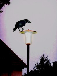 Crow on a lamp post