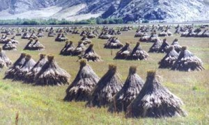 huts-on-the-steppe