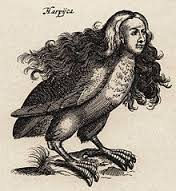 harpy-images