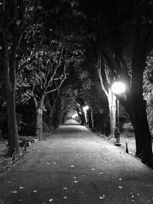 Park alley at night